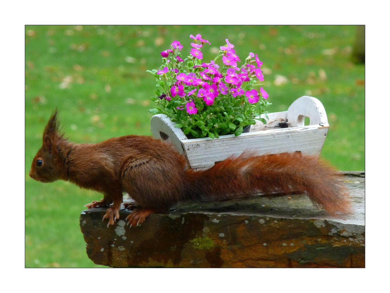 Mon premier écureuil ...