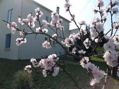 Mon printemps .....