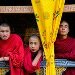monaci giovani