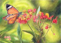 Monarch auf Blüten