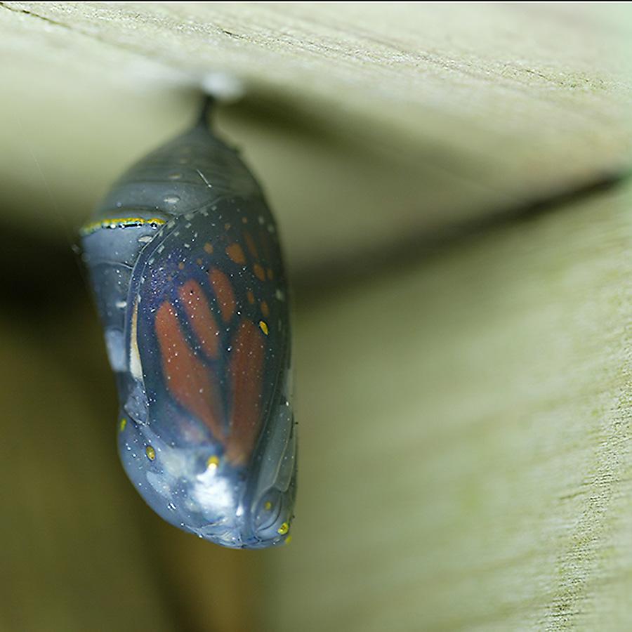 Monarch Crystalline