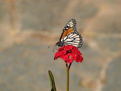 Monarch ... Original
