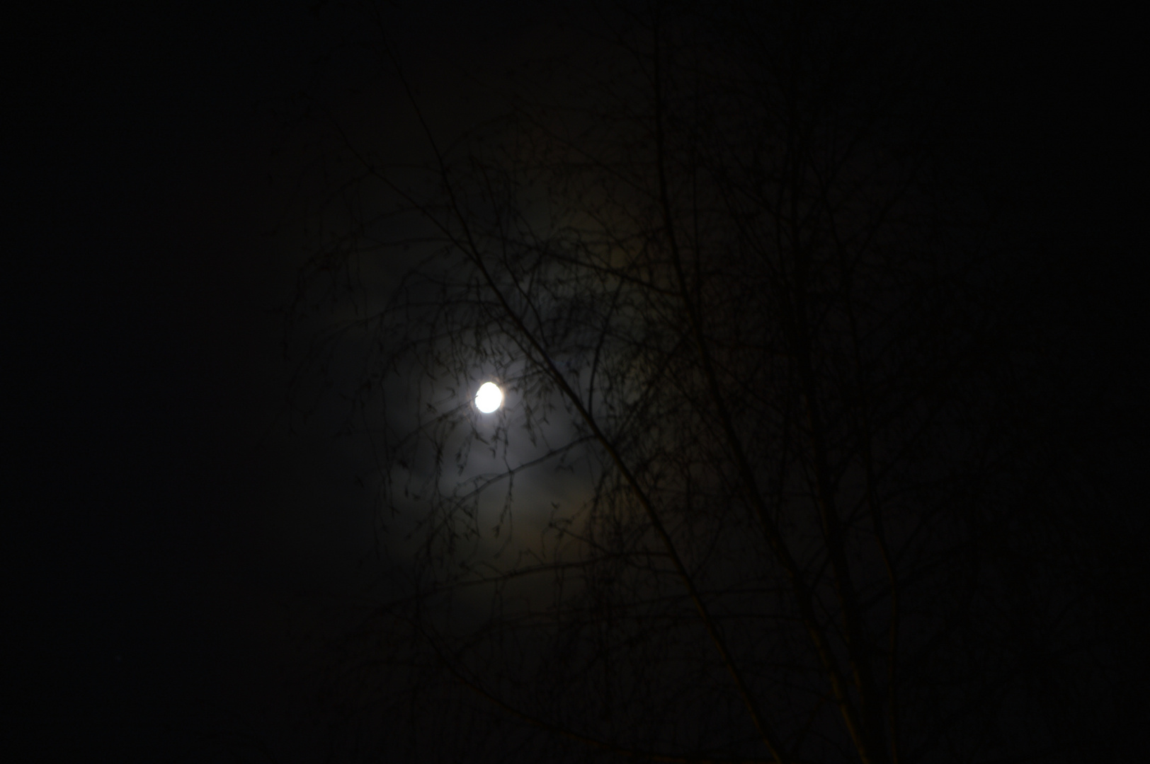 Mond im Heimatgarten