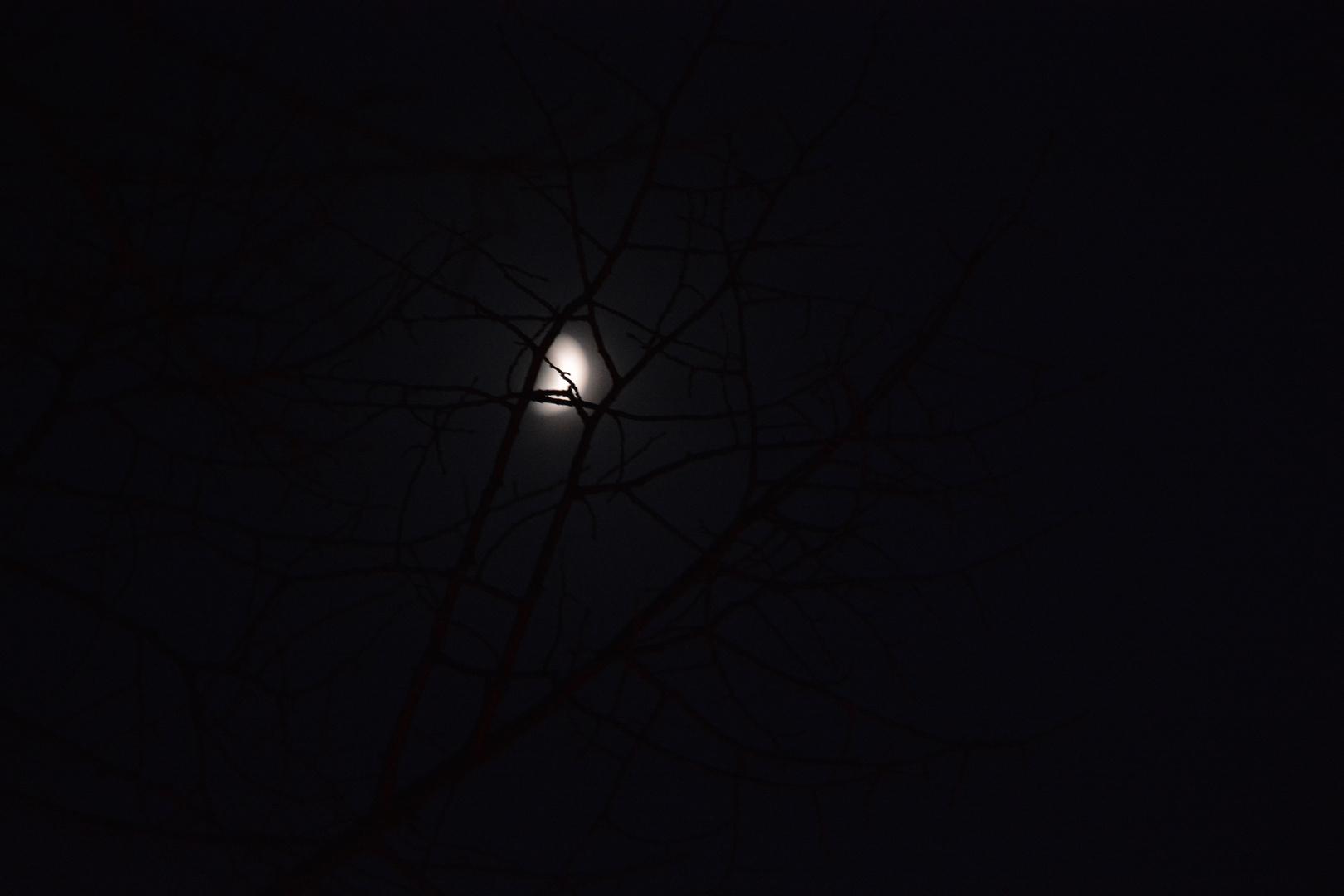 Mond mit Baum