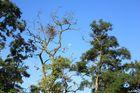 Mond über den Bäumen Nebras