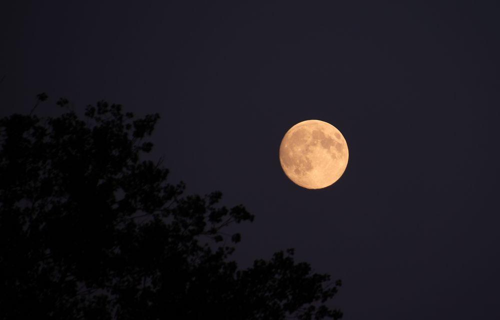 Mond und Baum