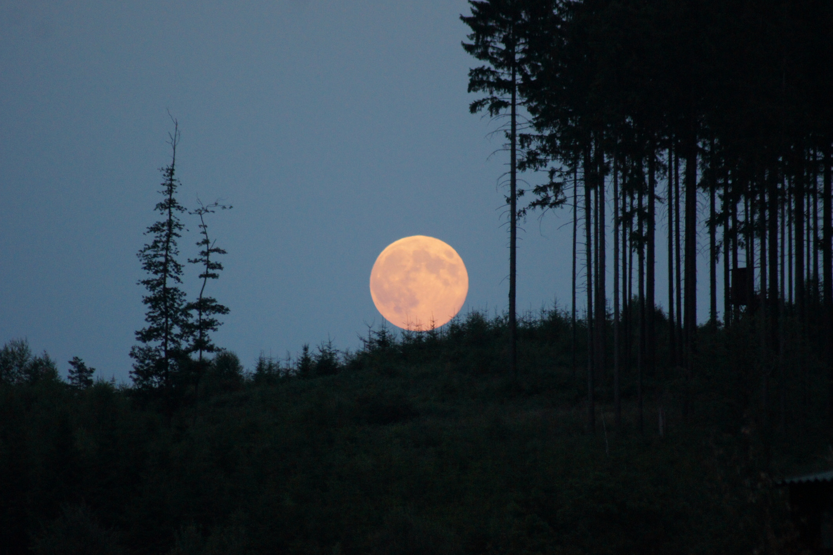 Mond versteckt sich im Wald
