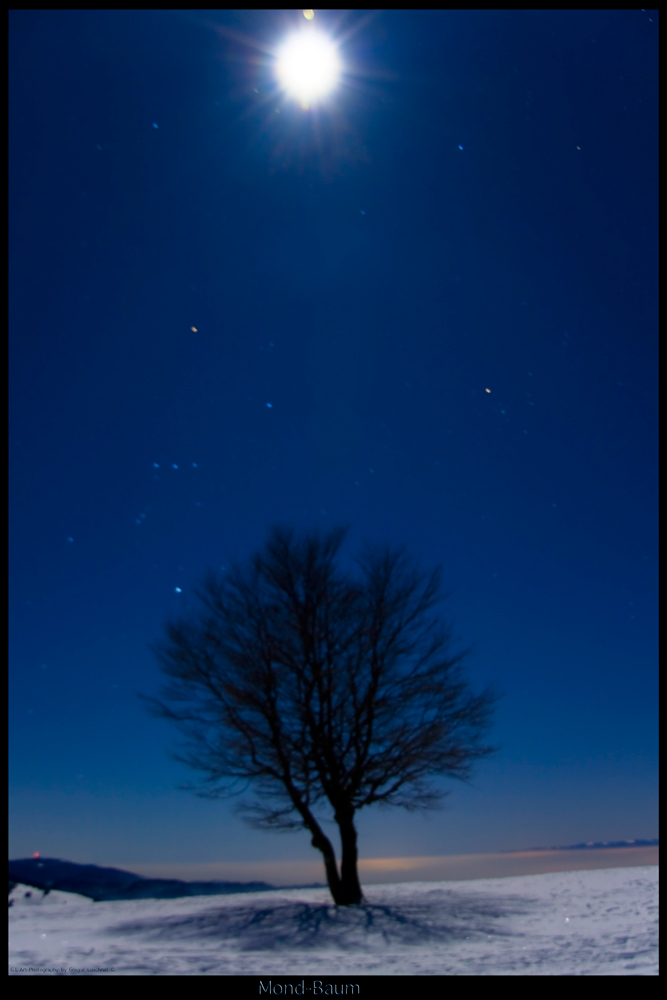 Mondbaum