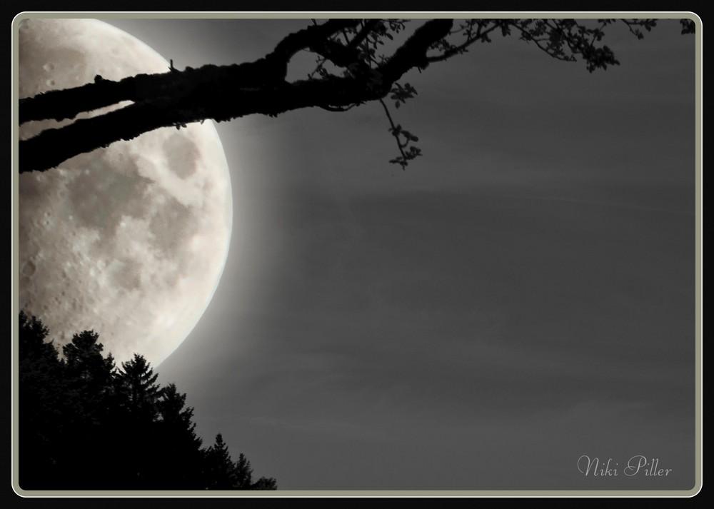 Mondfang