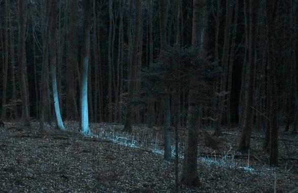 Mondlicht (1)