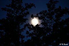 Mondlicht 1