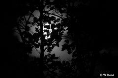 Mondlicht 3