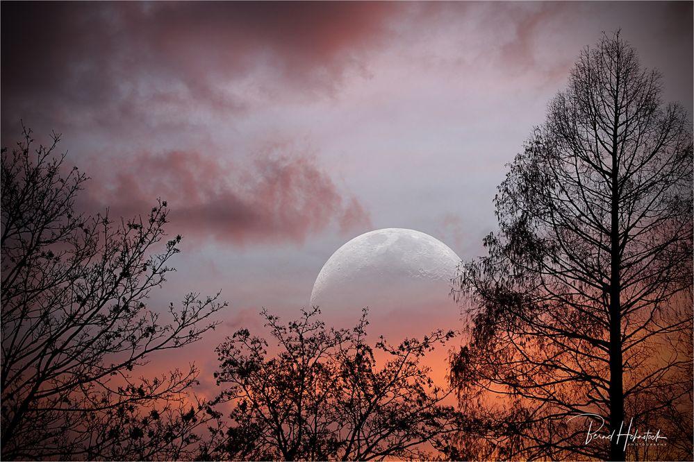 Mondnacht ..... am Niederrhein