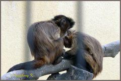 Mondo-Verde - 2 Affen beim gemeinsamen Spiel