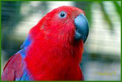 Mondo-Verde - aufmerksamer Papagei