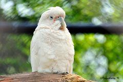 Mondo Verde - ein etwas müder exotische Vogel
