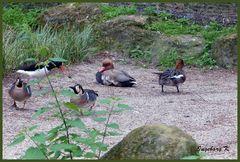 Mondo-Verde - ein Vogelparadies