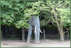Mondo-Verde - Elefant