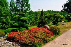 Mondo Verde - japanische Gartenanlage