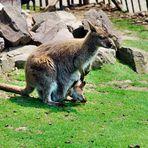 Mondo Verde - Känguru mit Kind im Beutel