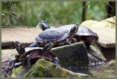 Mondo-Verde - Schildkröten
