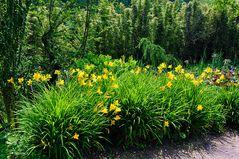 Mondo Verde - Taglilien