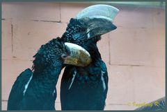 Mondo-Verde - zwei Vögel mit imposanten Hörnern - wer weiß den Namen?