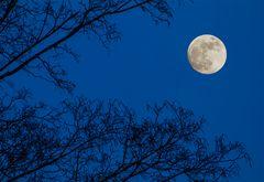 Monduntergang am 01.02.2018 um 7:52