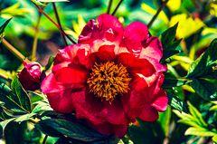 Monets Garten.        ..120_1234
