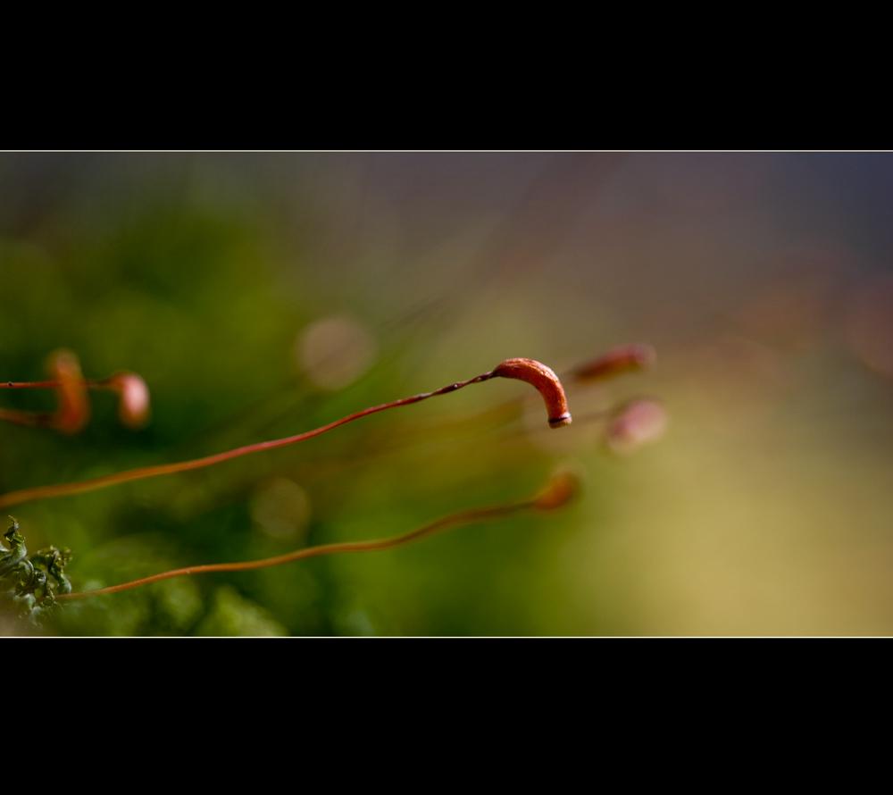 monitoring spring