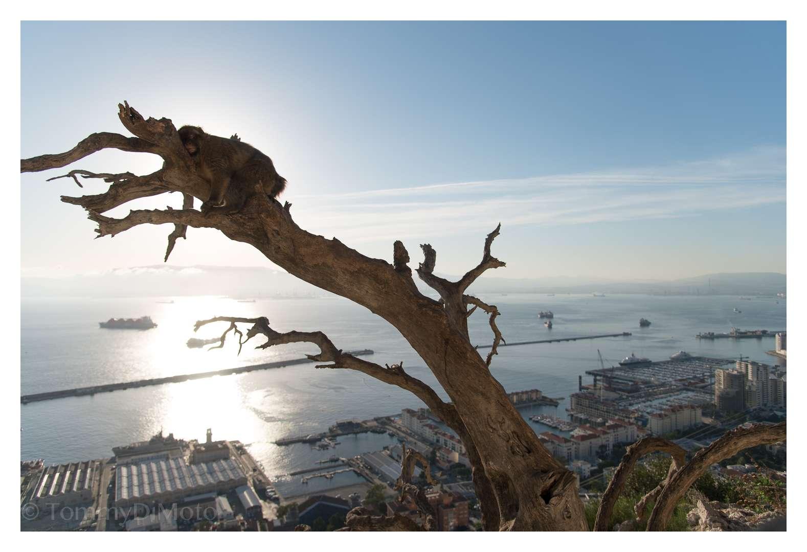 monkey business Gibraltar