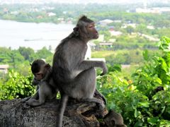 """Monkey Hill"""