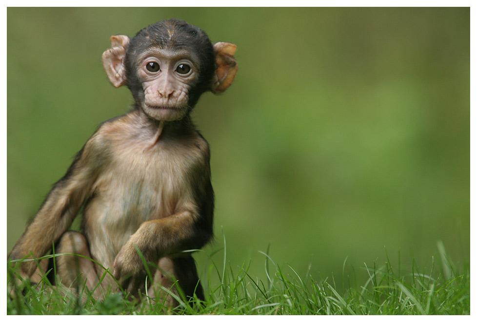 monkey-monday