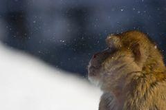 monkey & snow