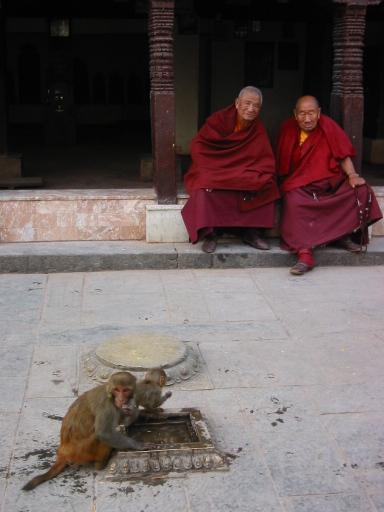 Monks and monkeys
