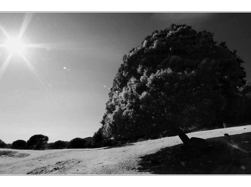 monochrome tree