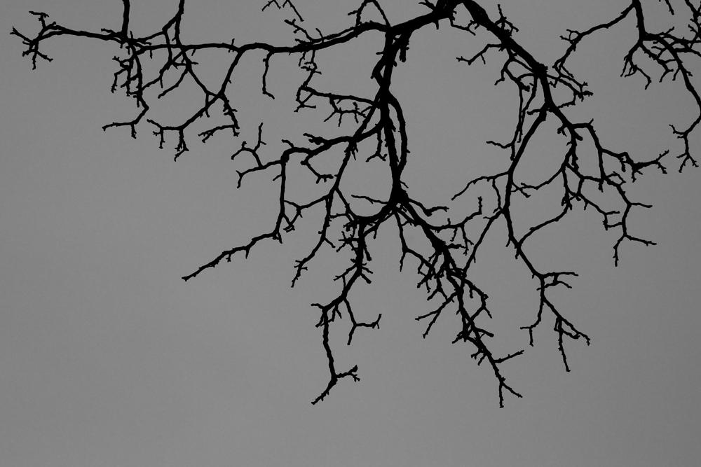 Monochromer Perspektivimus