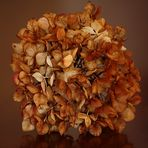 Monocromia di un fiore di ortensia