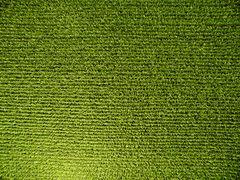 monoculture agriculture II