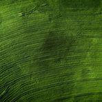 monoculture agriculture IV