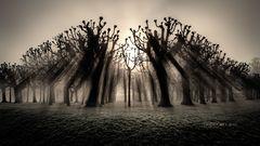 Monoton im Nebel