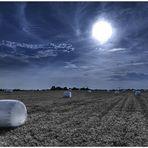 Monsanto Dreaming #2