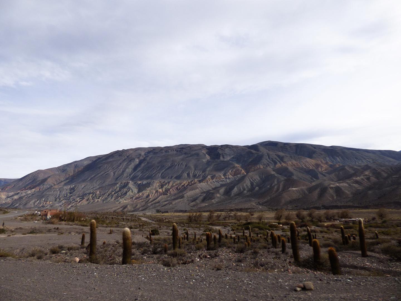 Montañas de Salta, con su ejército de cardones