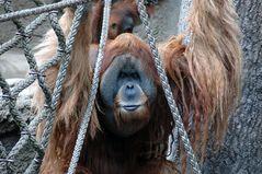 Montag Morgen ...und ich hänge immer noch in den Seilen :-)