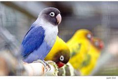 Montagsblaues Vögelchen...
