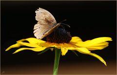 Montagsschmetterling # Mariposa para el lunes