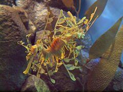 Monterey Bay Aquarium 7