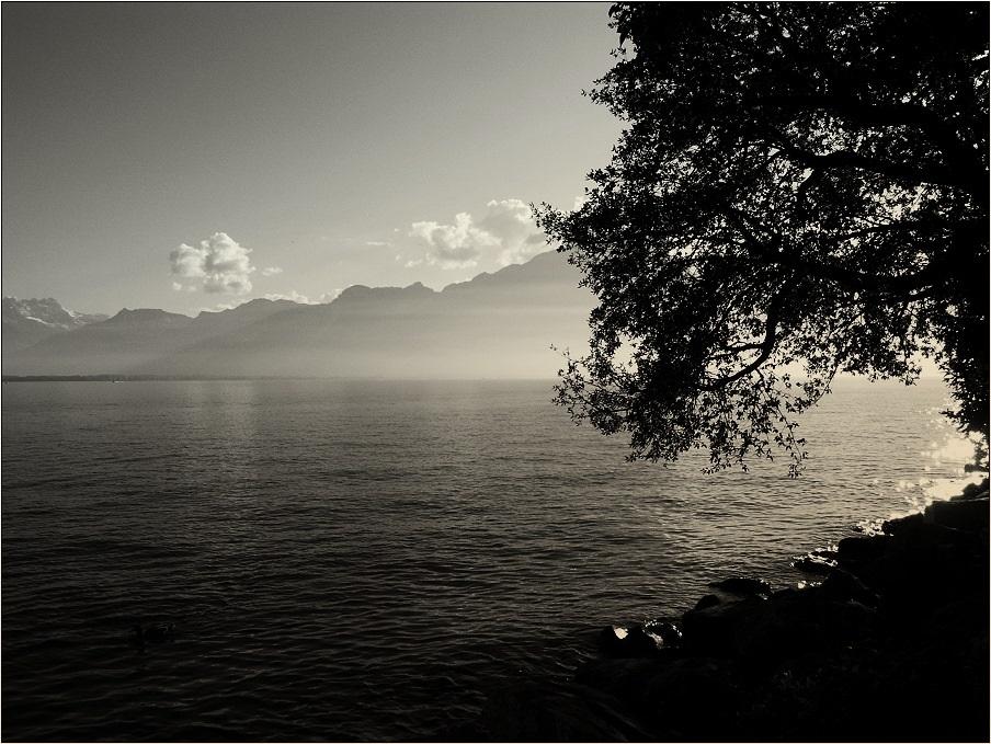 """""""Montreux"""""""