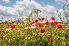 Montuiri - Blumenpracht am Wegesrand