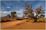 Monument Valley Navajo Tribal Park - Utah - USA